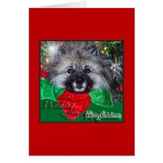 Keeshond-Weihnachtskarte Karte