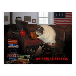 Keine Tierversuche-Postkarte Postkarte