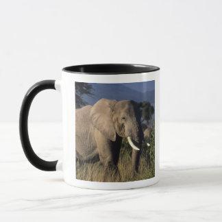 Kenia: Amboseli, männlicher afrikanischer Elefant Tasse