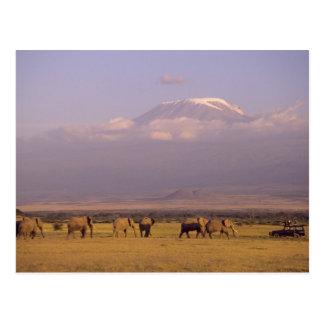 Kenia: Amboseli Nationalpark, Elefanten und Postkarte