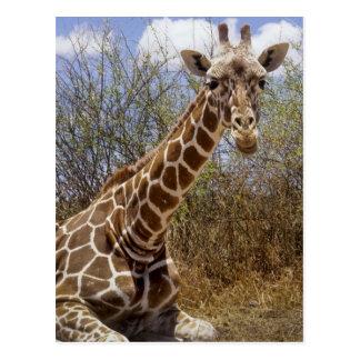 Kenia: Laikipia Hochebene, Loisaba Wildnis Postkarte