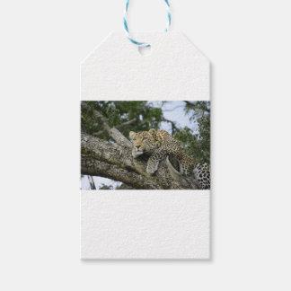 Kenia-Leopard-Baum-Afrika-Safari-tierische wilde Geschenkanhänger