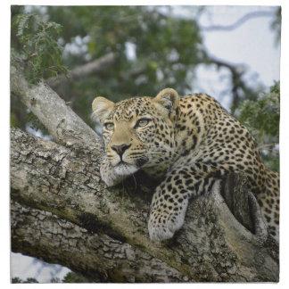 Kenia-Leopard-Baum-Afrika-Safari-tierische wilde Stoffserviette