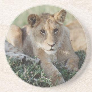 Kenia, Masai Mara, Löwe-CUB-Sitzen Getränkeuntersetzer