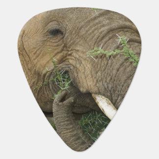Kenia, Samburu nationale Reserve. Nahaufnahme von Plektron