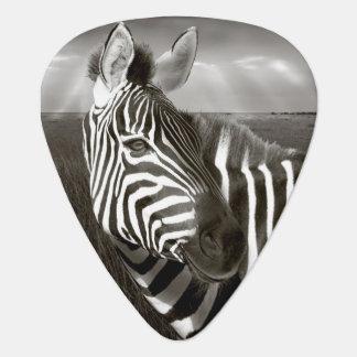 Kenia. Schwarz u. Weiß von Zebra und von Ebene Plektrum