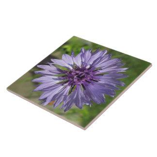 Keramik-Fliesen-- lila/lila des Junggesellen Knopf Fliese