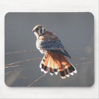 Kestral Vogel-Tier-Tier-Raubvogel-Sumpfgebiete Mousepad