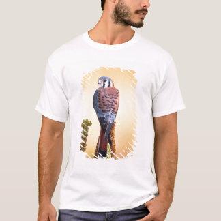 Kestrel, Falco sparverius, gebürtig nach US u. T-Shirt