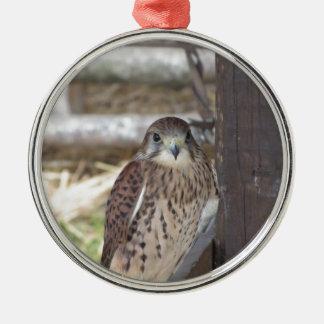 Kestrel gehockt auf einem Zaunposten Silbernes Ornament