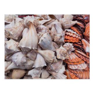 Key West, Seashells Postkarte