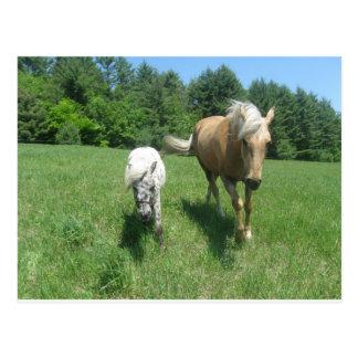 Khrysta, das Morgan-Pferd und Bargeld, die Postkarte