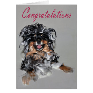 Kiesel congrat Karte