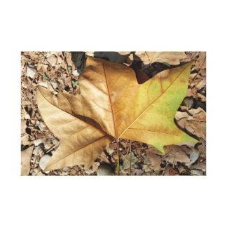 Kiesel und Blätter Leinwanddruck