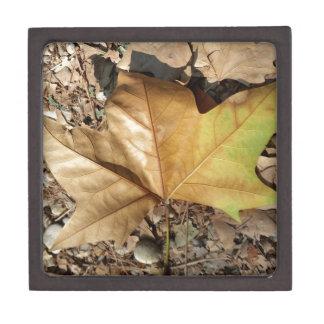 Kiesel und Blätter Schmuckkiste
