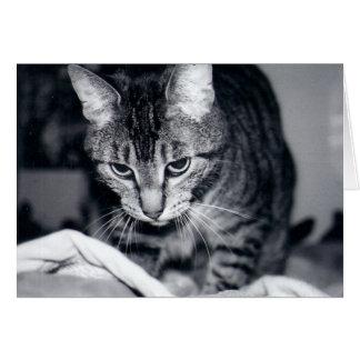 Kiki die Katze - Gruß-Karte + weiße Umschläge Karte