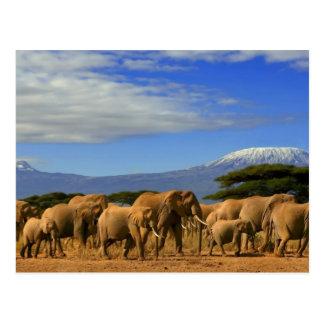 Kilimanjaro und Elefanten Postkarte