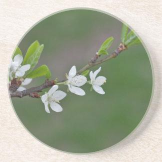 Kirschbaum-Blumen Getränkeuntersetzer