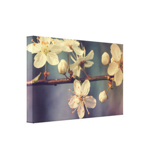 Kirschbaumblüten Leinwanddruck