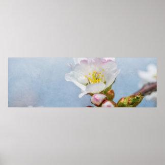 Kirschblüte-Blüte Poster