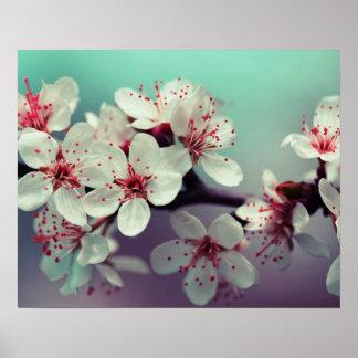 Kirschblüte, Cherryblossom, Kirschblüte Poster