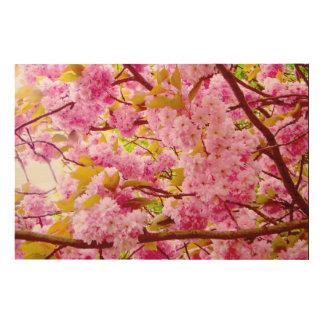 Kirschblüte Holzdruck