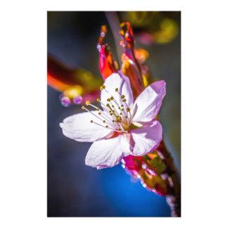 Kirschblüte - japanische KirschBlume Flyer
