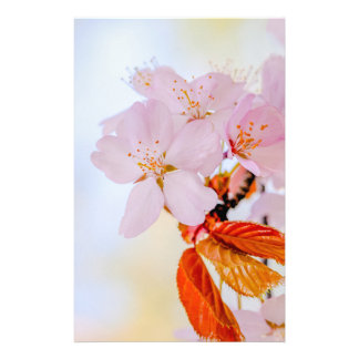 Kirschblüte - japanische Kirschblüte Flyer