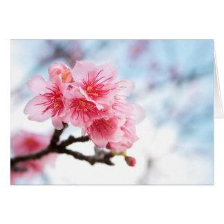 Kirschblüte Karte