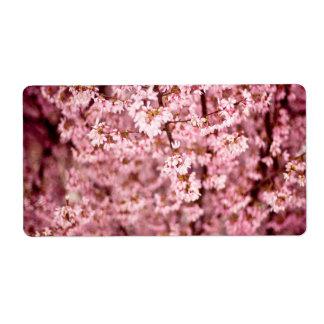 Kirschblüte-Kirschblüte