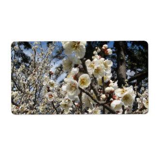 Kirschblüte/Kirschblüte/サクラ (桜)