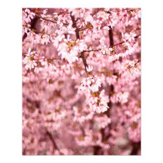 Kirschblüte-Kirschblüte Flyer
