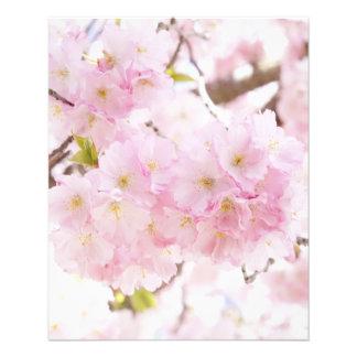 Kirschblüte Kirschblüte Flyer