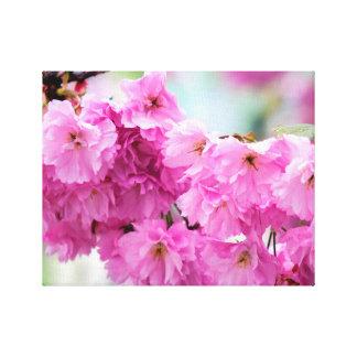 Kirschblüte Kirschblüte Leinwanddruck