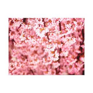 Kirschblüte-Kirschblüte Leinwanddruck