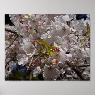 Kirschblüte-Kirschblüten-Plakat Poster