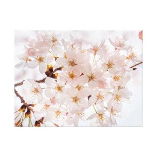 Kirschblüte Leinwanddruck