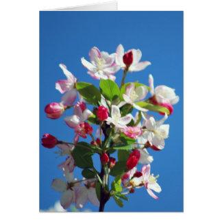 Kirschblüte und -bedeutung karte