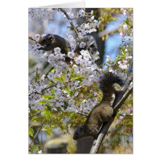 Kirschblüte und Eichhörnchen Karte