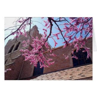 Kirschblüten an der Kirche Karte