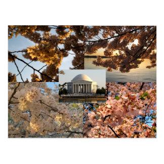 Kirschblüten an Gezeiten- Becken DCs Postkarte