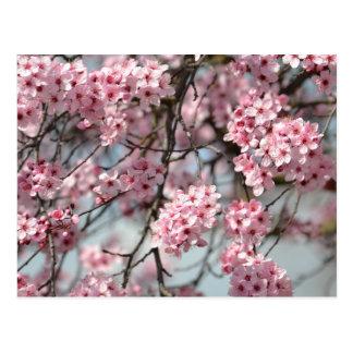 Kirschblüten-Baum Postkarte