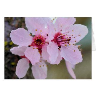 Kirschblüten-Blumen auf einem Baum Karte