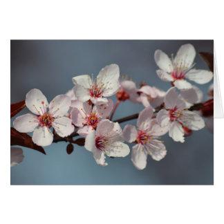 Kirschblüten-Blumen Karte