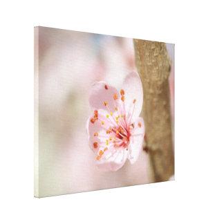 Kirschblüten-Blumen-Niederlassungs-Natur-Foto Leinwanddruck