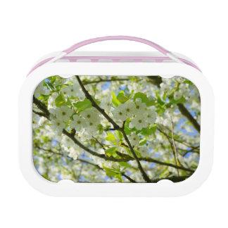 Kirschblüten Brotdose