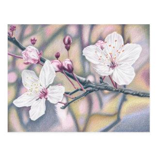 Kirschblüten - Farbstiftzeichnung Postkarte