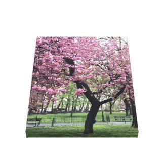Kirschblüten-Frühjahr-Baum NYC New York City Leinwanddruck