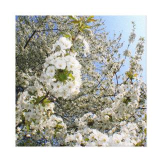 Kirschblüten, Frühling Leinwanddruck