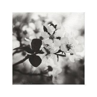 Kirschblüten im schwarzen u. weißen Leinwand-Druck Leinwanddruck